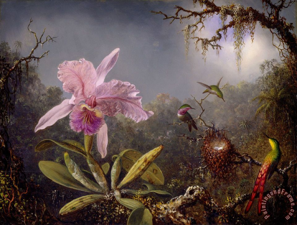 Martin Johnson Heade Cattleya Orchid And Three Hummingbirds Art Print