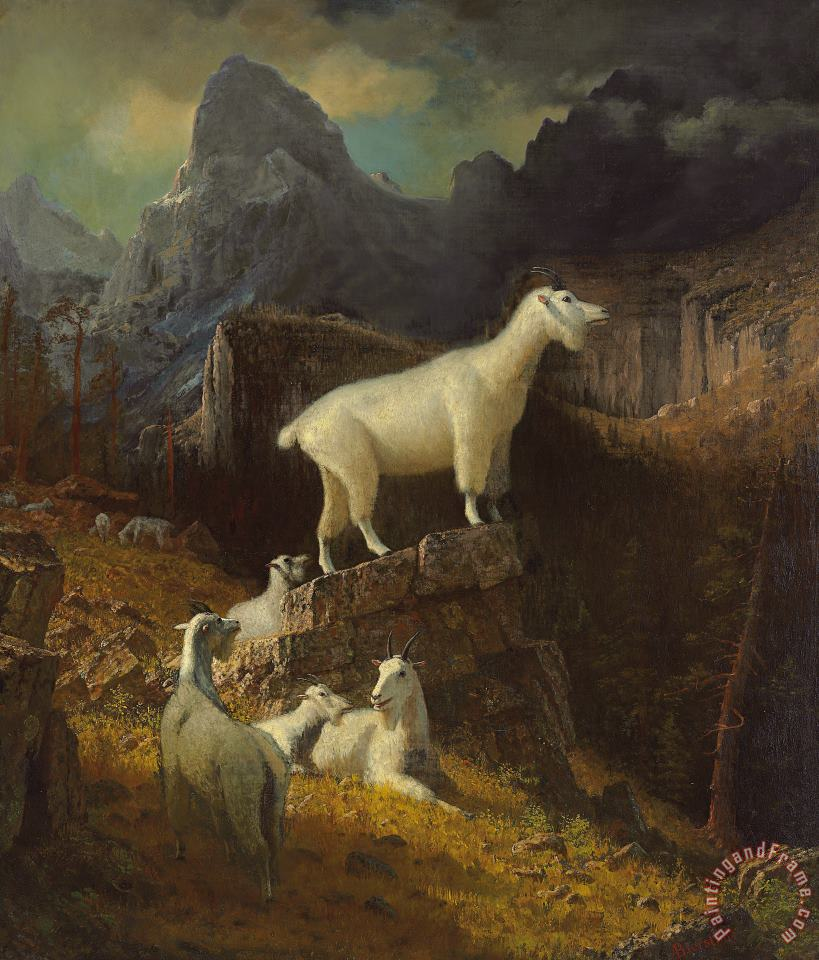 Rocky Mountain Goats painting - Albert Bierstadt Rocky Mountain Goats Art Print