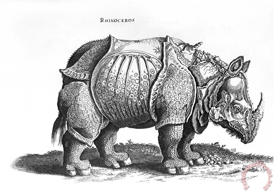 Rhinoceros No 76 From Historia Animalium By Conrad Gesner painting - Albrecht Durer Rhinoceros No 76 From Historia Animalium By Conrad Gesner Art Print
