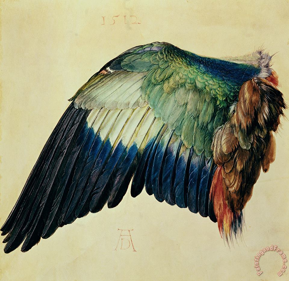 Albrecht Durer Wing of a Blue Roller Art Painting