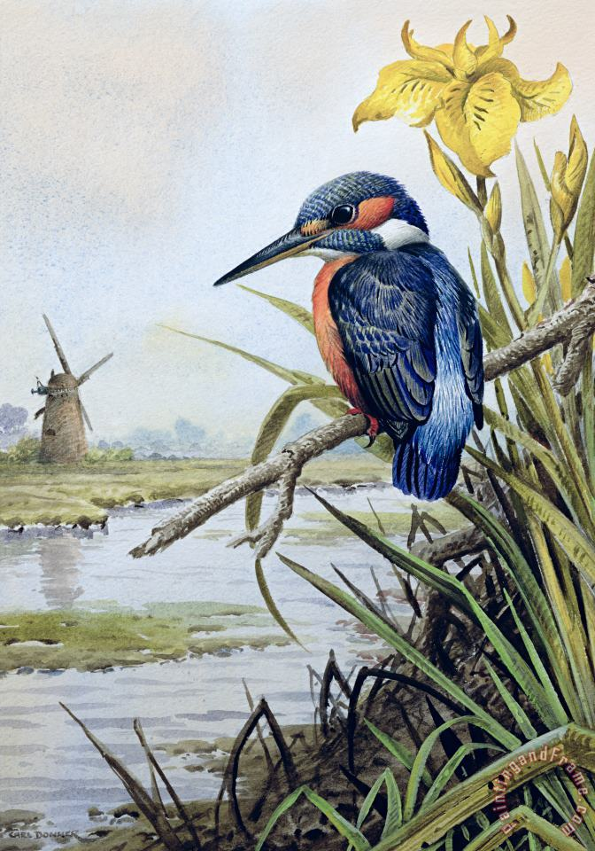 Kingfisher with Flag Iris and Windmill painting - Carl Donner Kingfisher with Flag Iris and Windmill Art Print