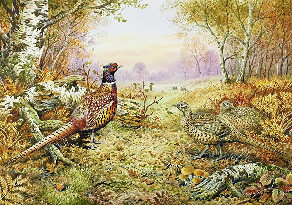 Pheasants in Woodland painting - Carl Donner Pheasants in Woodland Art Print