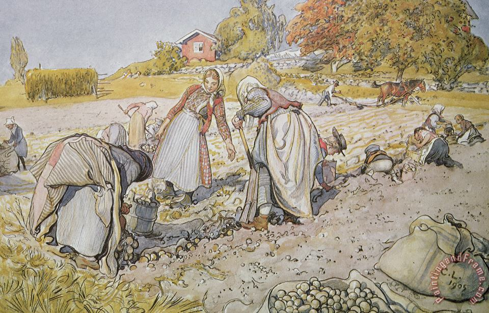 Carl Larsson Digging Potatoes Art Painting