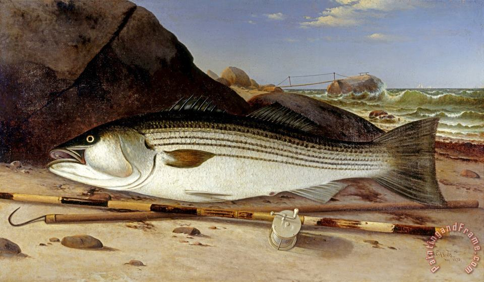 Charles Henry Gifford Striped Bass On Cuttyhunk Island 1870 Painting Striped Bass On Cuttyhunk Island 1870 Print For Sale