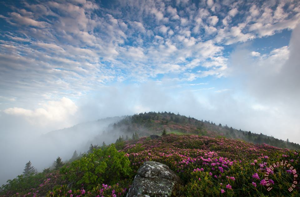 Blue Skies Above Catawba Rhododendron in the Roan Mountain Highlands painting - Collection 3 Blue Skies Above Catawba Rhododendron in the Roan Mountain Highlands Art Print