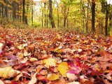 Buy Art Painted