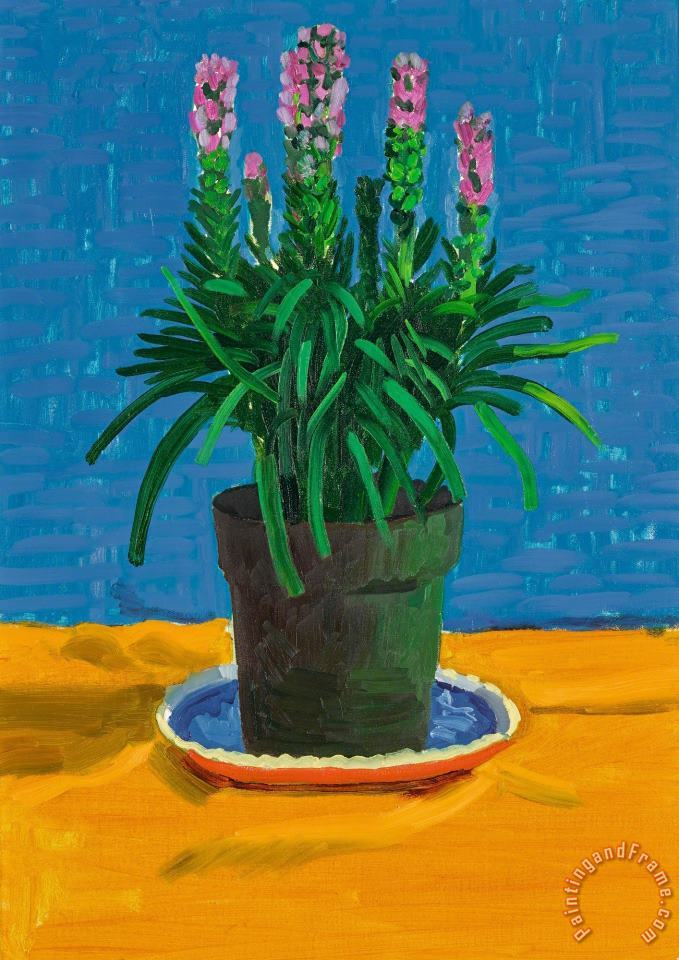 Plant on Yellow Cloth, 1995 painting - David Hockney Plant on Yellow Cloth, 1995 Art Print