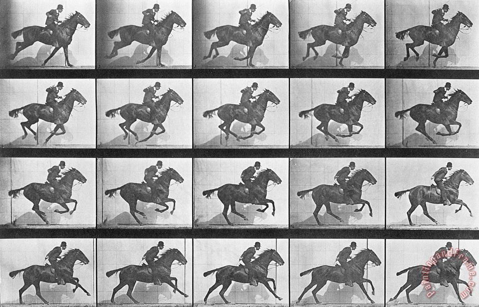 Eadweard Muybridge Galloping Horse Art Print