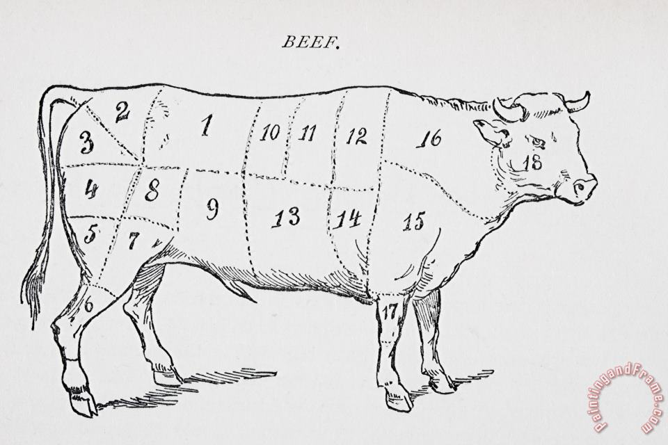 English School Drawing Of A Bullock Marked To Show Eighteen Different Cuts Of Meat Art Print
