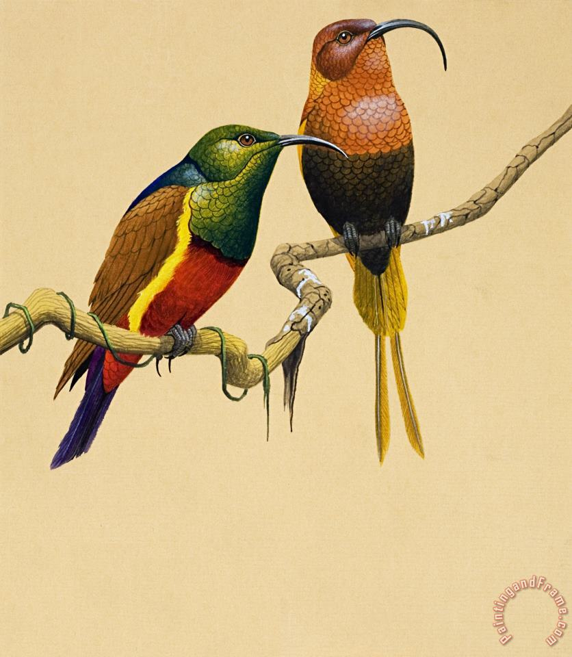 Sun Birds painting - English School Sun Birds Art Print