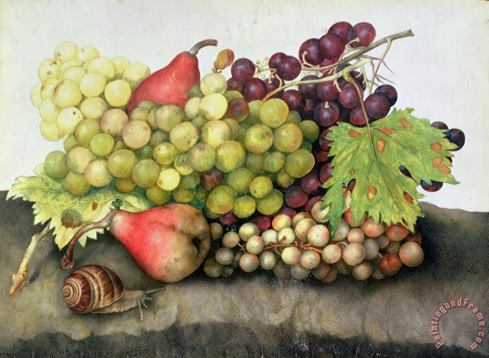 Snail with Grapes and Pears painting - Giovanna Garzoni Snail with Grapes and Pears Art Print