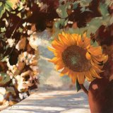 Il Girasole by Collection 7