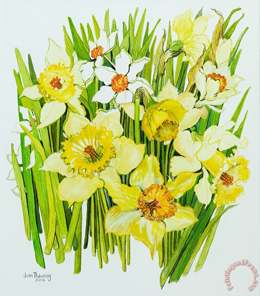Daffodils And Narcissus painting - Joan Thewsey Daffodils And Narcissus Art Print