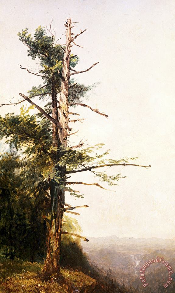 Dying Tree on Mountaintop painting - John Frederick Kensett Dying Tree on Mountaintop Art Print