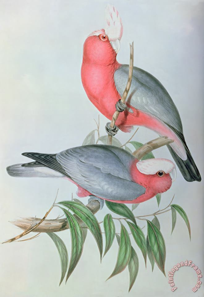 John Gould Birds Of Asia Art Painting