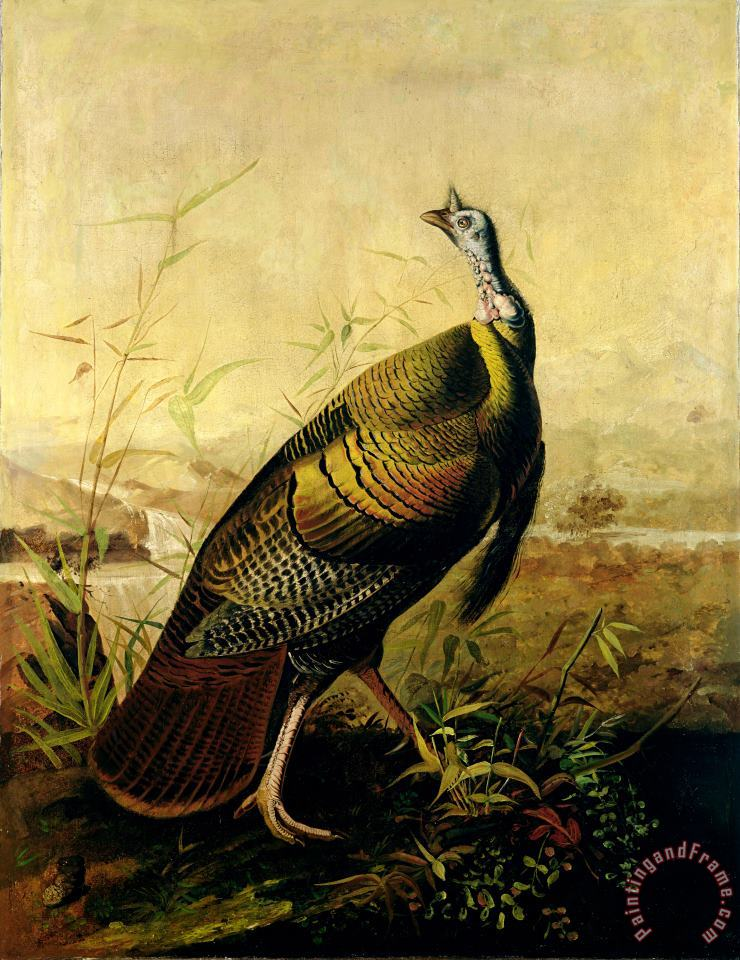 The American Wild Turkey Cock painting - John James Audubon The American Wild Turkey Cock Art Print