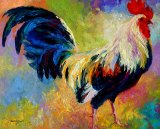 Eye Candy - Rooster