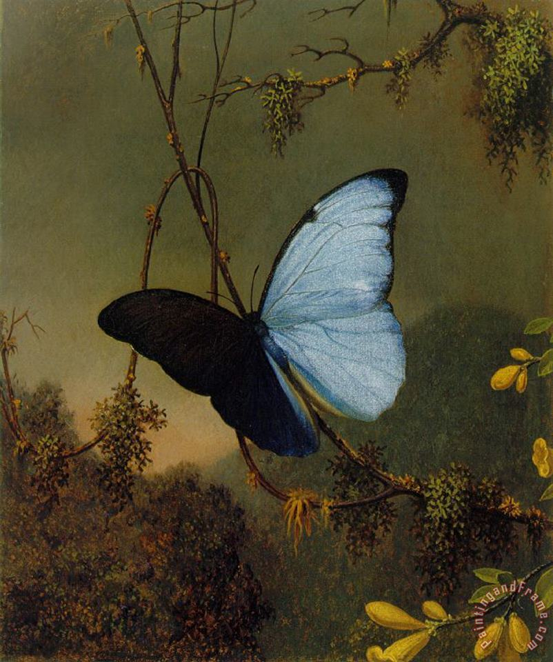 Blue Morpho Butterfly painting - Martin Johnson Heade Blue Morpho Butterfly Art Print