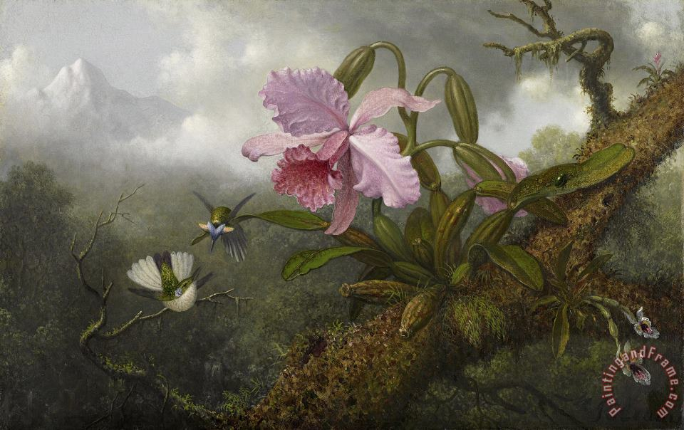 Cattleya Orchid, Two Hummingbirds, And a Beetle painting - Martin Johnson Heade Cattleya Orchid, Two Hummingbirds, And a Beetle Art Print