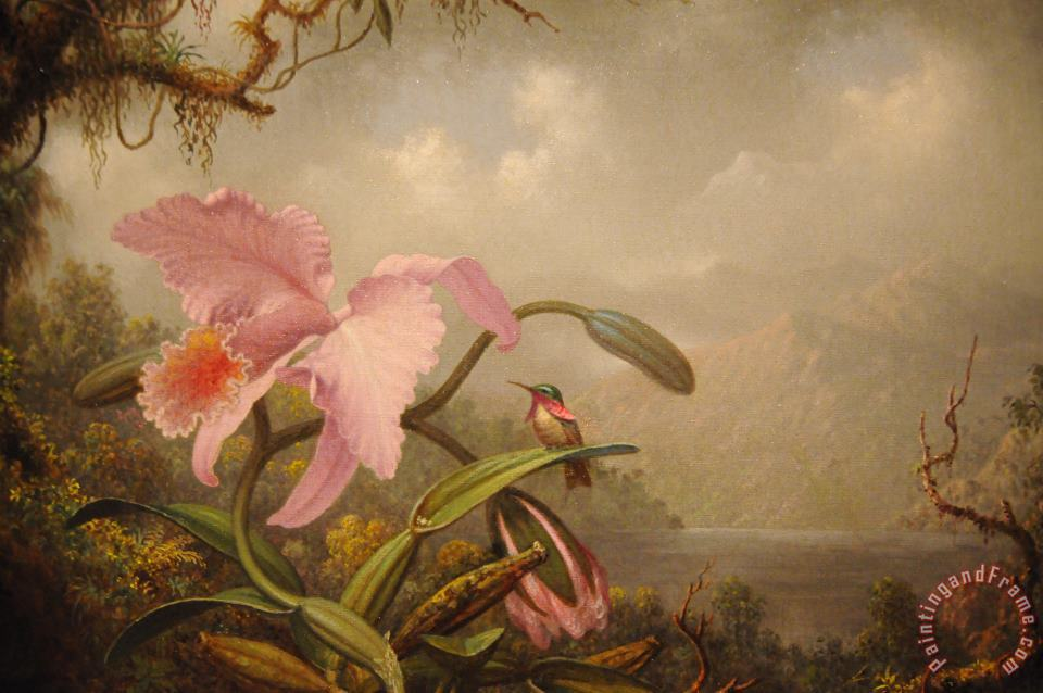 Orchid And Hummingbird painting - Martin Johnson Heade Orchid And Hummingbird Art Print