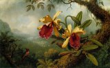 Orchids And Hummingbird by Martin Johnson Heade