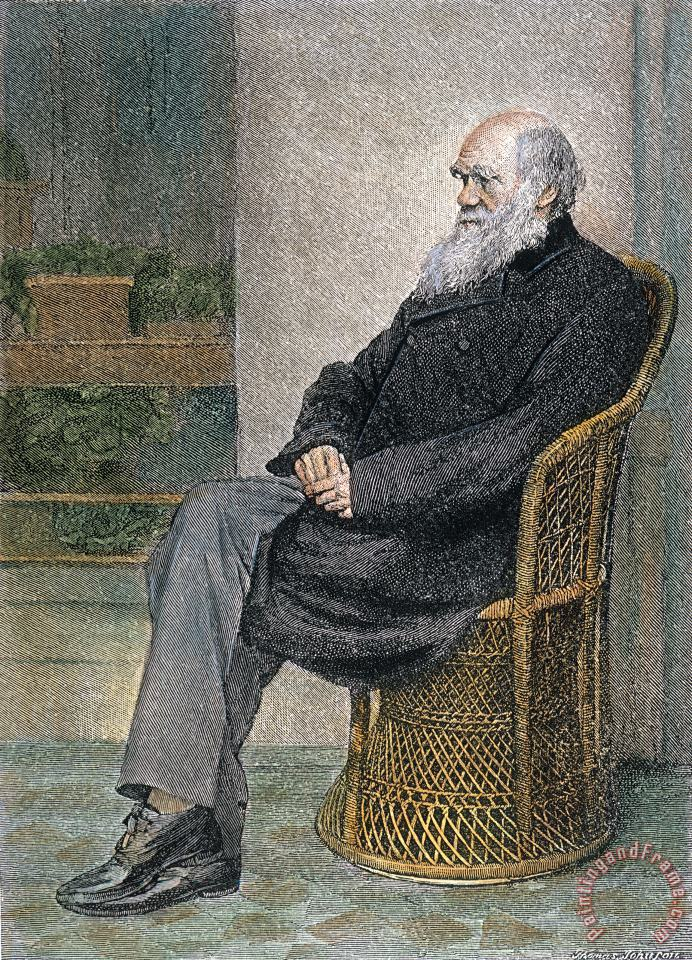 Others Charles Darwin (1809-1882) Art Print