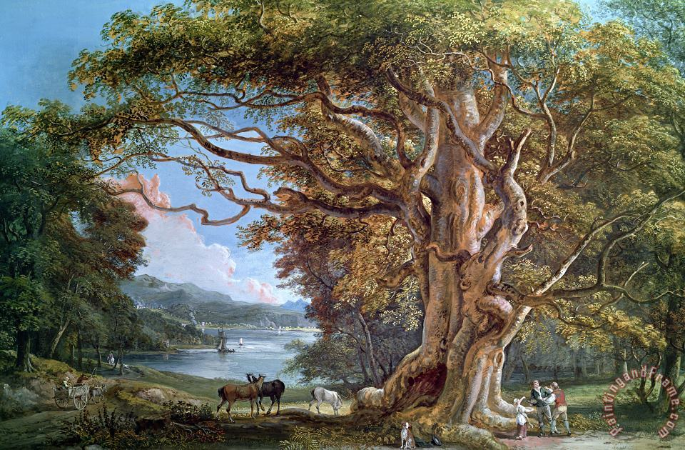 An Ancient Beech Tree painting - Paul Sandby An Ancient Beech Tree Art Print