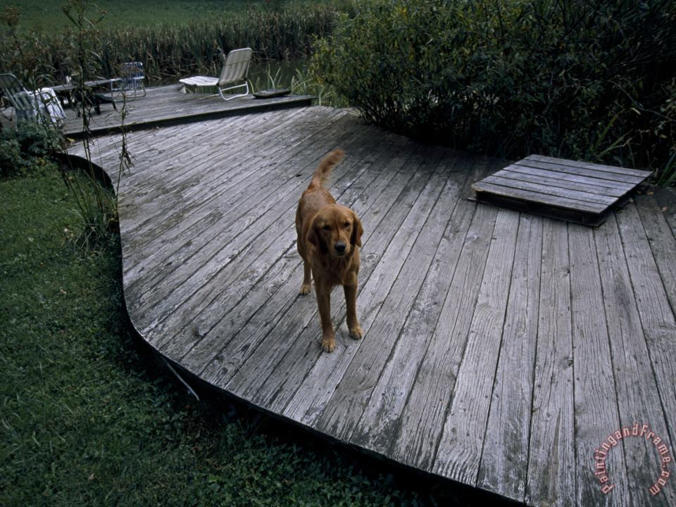 Raymond Gehman A Pet Dog Standing on a Deck Art Painting