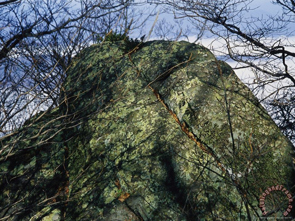 Raymond Gehman Greenstone Rock Covered with Lichens on Thunder Ridge Art Painting