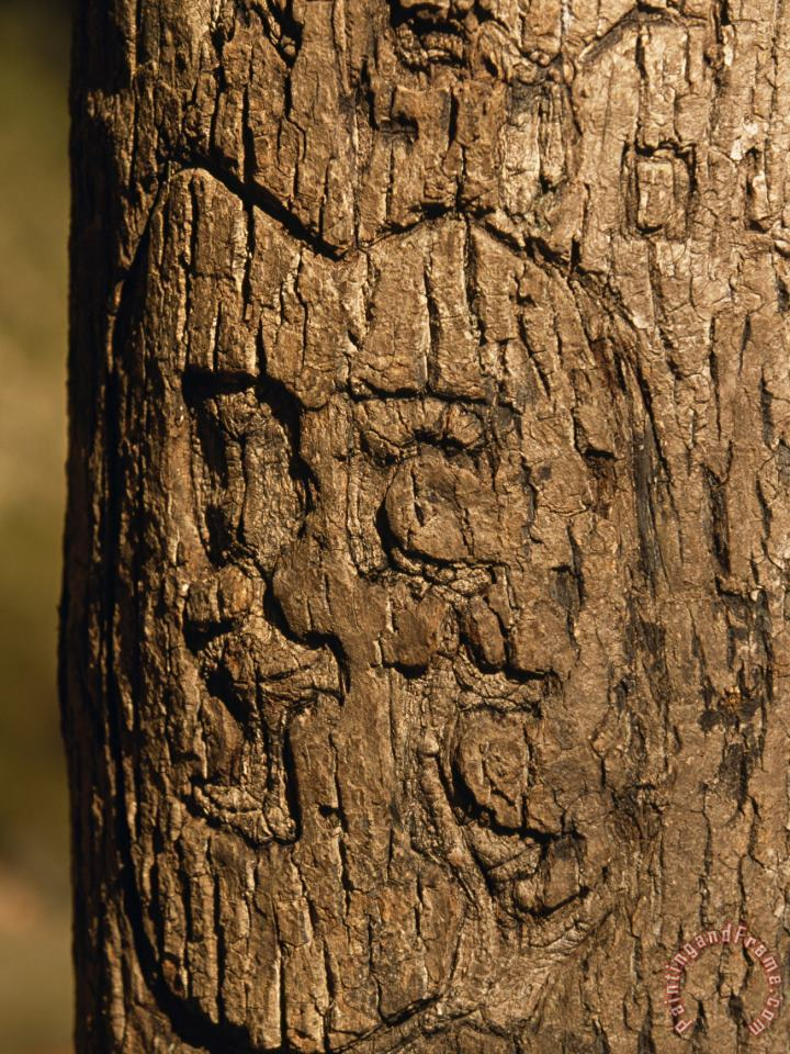 Heart And Initials Carved Into The Trunk of a Tree painting - Raymond Gehman Heart And Initials Carved Into The Trunk of a Tree Art Print