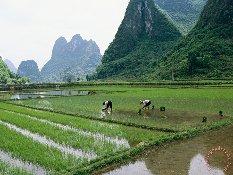 Planting Rice with Limestone Karst Mountains in The Background Near Guilin painting - Raymond Gehman Planting Rice with Limestone Karst Mountains in The Background Near Guilin Art Print