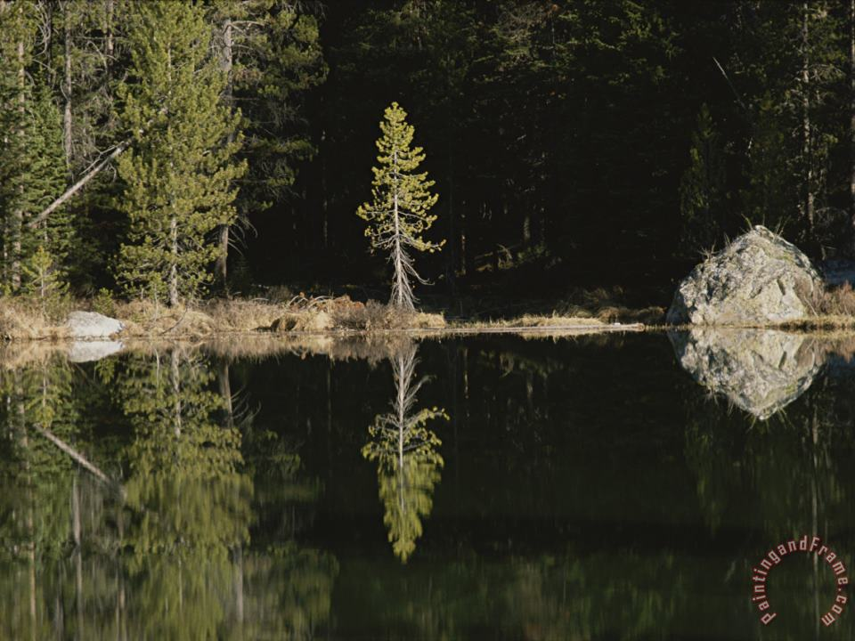 Shoreline Trees And Rock Reflected on The Surface of String Lake painting - Raymond Gehman Shoreline Trees And Rock Reflected on The Surface of String Lake Art Print