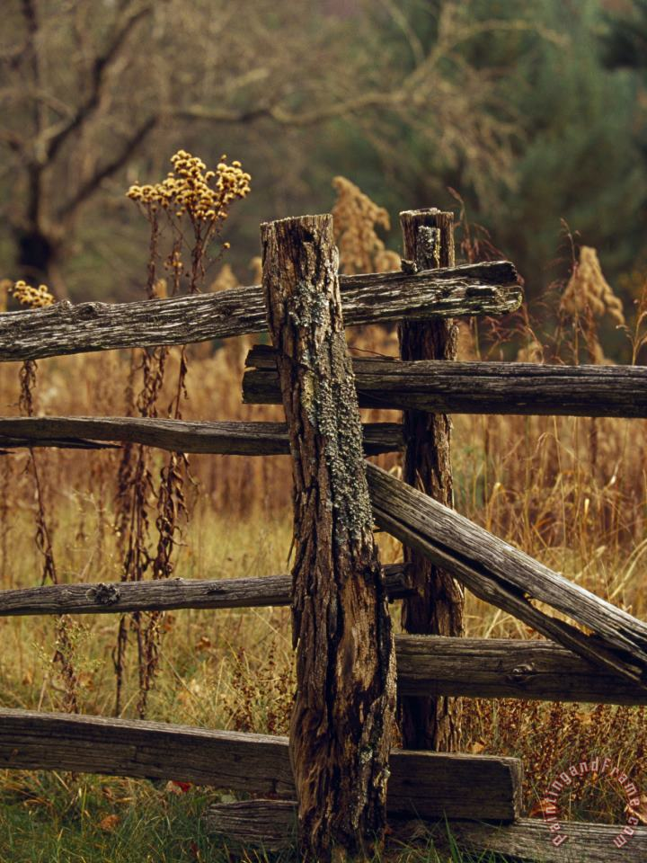 Tall Weeds in Autumn Brown Along a Split Rail Fence painting - Raymond Gehman Tall Weeds in Autumn Brown Along a Split Rail Fence Art Print