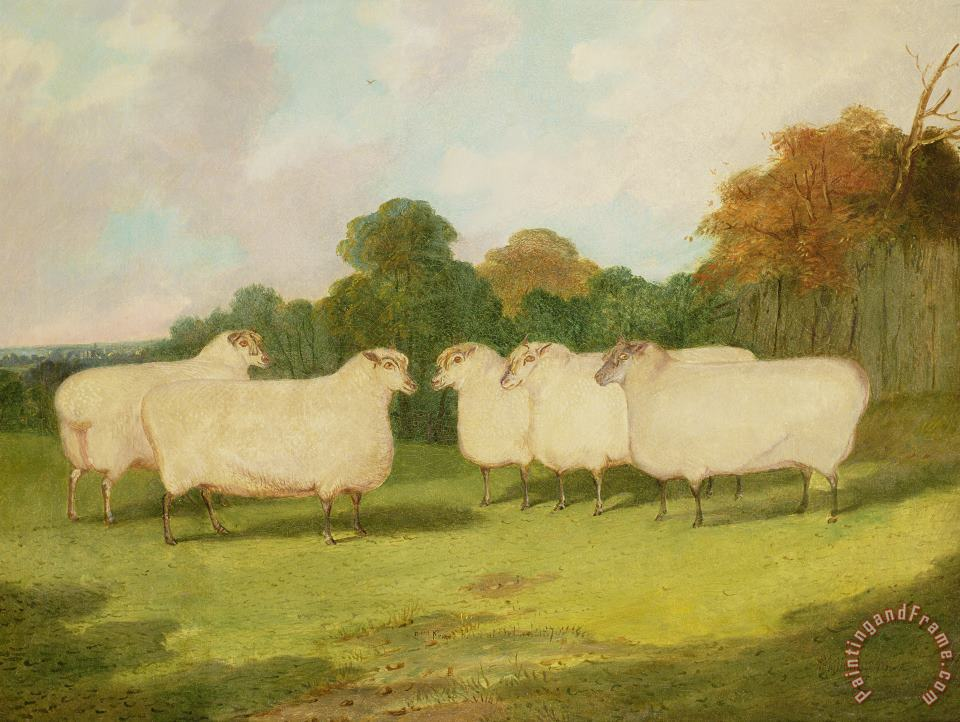 Study of Sheep in a Landscape painting - Richard Whitford Study of Sheep in a Landscape Art Print