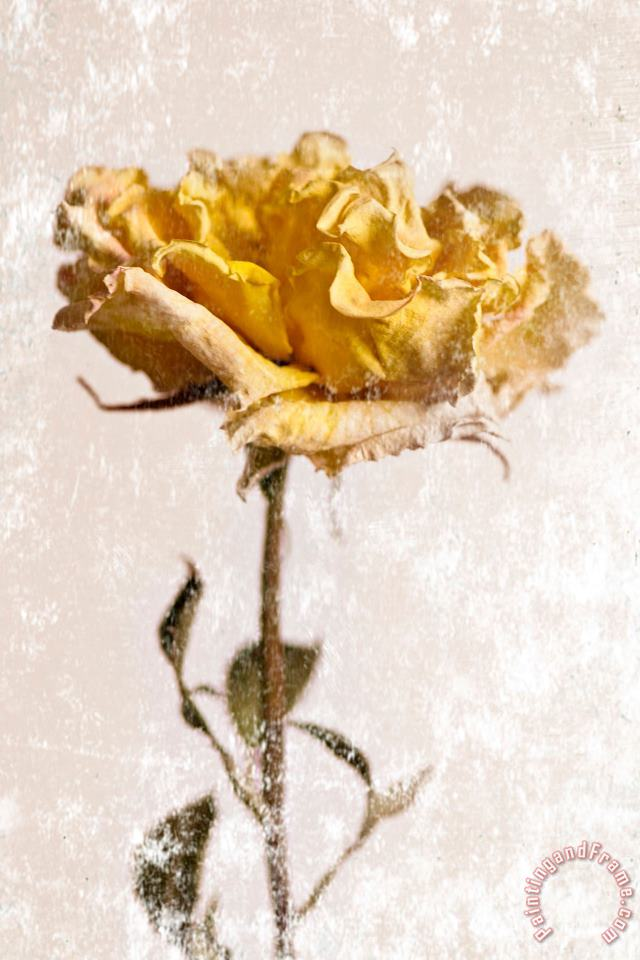 Yellow Rose painting - Sia Aryai Yellow Rose Art Print