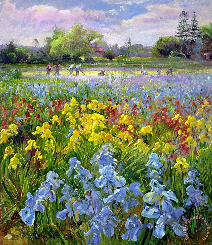 Hoeing Team and Iris Fields painting - Timothy Easton Hoeing Team and Iris Fields Art Print