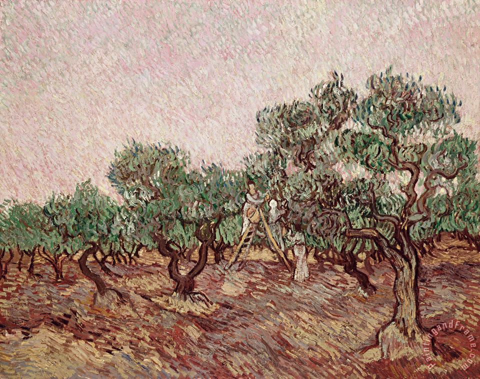 Vincent van Gogh The Olive Pickers Art Painting