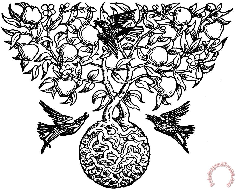 Birds And Fruit Tree Engraving painting - Walter Crane Birds And Fruit Tree Engraving Art Print
