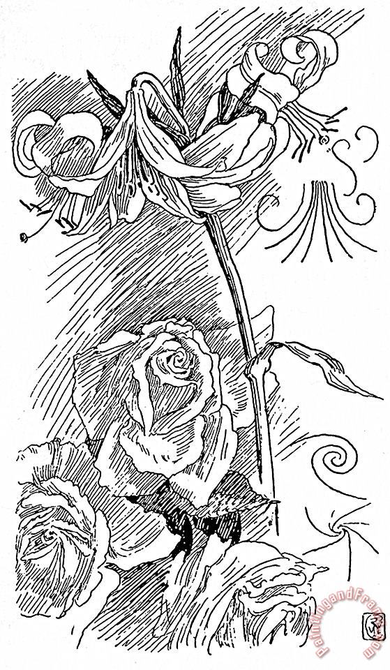 Rose And Lily Line Drawing painting - Walter Crane Rose And Lily Line Drawing Art Print