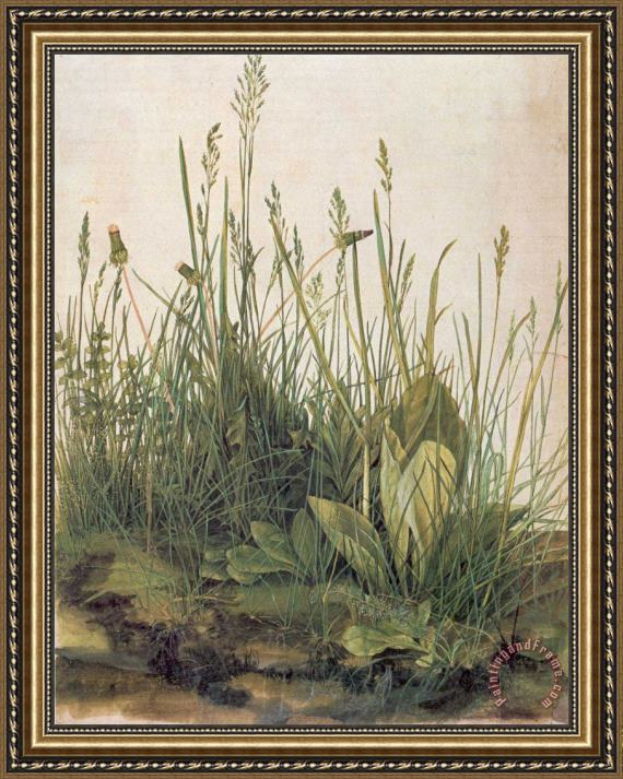 Albrecht Durer Great Piece Of Turf Framed Print