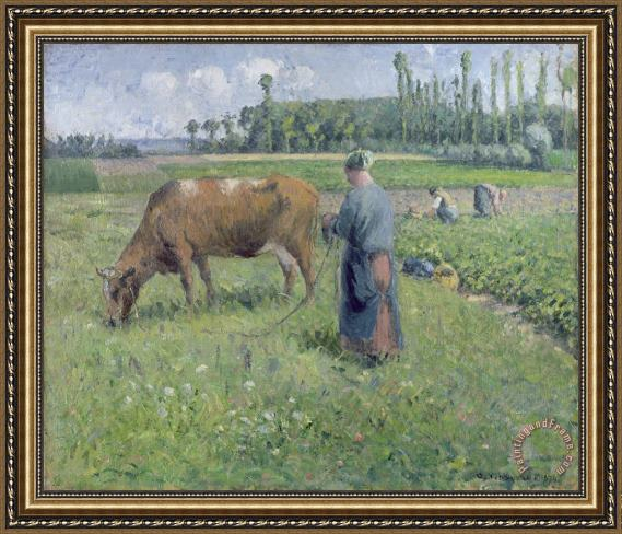 Camille Pissarro Girl Tending a Cow in Pasture Framed Print