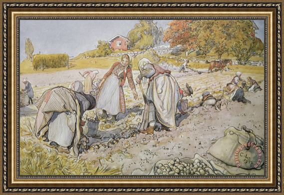 Carl Larsson Digging Potatoes Framed Painting