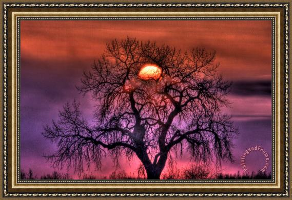 Collection 14 Sunrise Through The Foggy Tree Framed Print