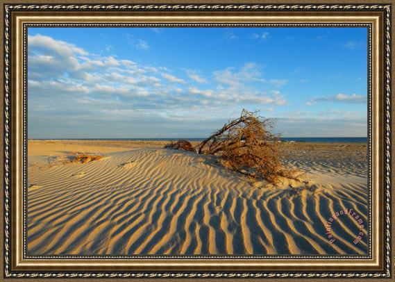 Collection 3 Hatteras Sands of Time Framed Painting