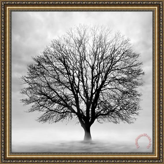 Collection 5 Silent Tree Framed Print