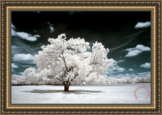 Collection 6 Dreamscape Tree Framed Print
