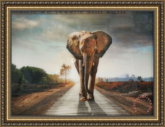 Collection Elephant 18 Framed Painting