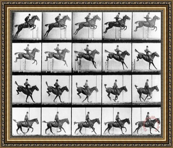 Eadweard Muybridge Man And Horse Jumping Framed Print