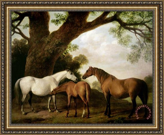 George Stubbs Two Mares and a Foal Framed Print