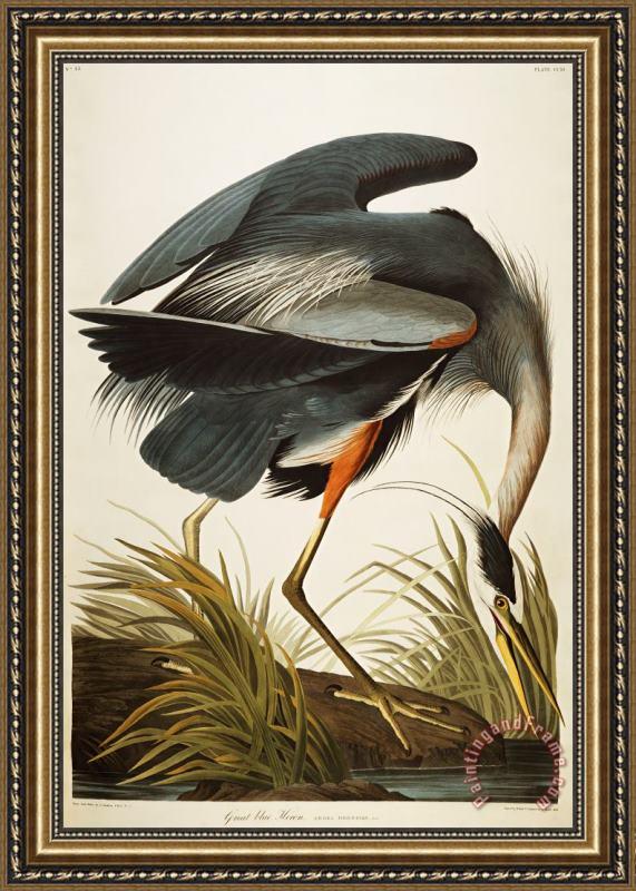 John James Audubon Great Blue Heron Framed Painting For